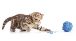 Het jonge kat spelen met blauwe clew stock afbeeldingen