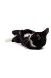 Het jonge katje speelt Stock Afbeeldingen