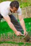 Het jonge landbouwer werken Stock Foto's
