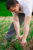 Het jonge landbouwer werken Royalty-vrije Stock Fotografie