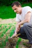 Het jonge landbouwer werken Royalty-vrije Stock Foto's