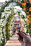 Het jonge meisje houdt weinig document vlag van Holland binnen op achtergrond van mooie boogmanier in hand van leliebloemen in de royalty-vrije stock foto's