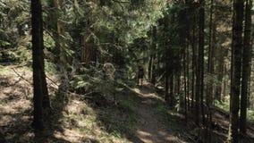 Het jonge meisje loopt in het bergenbos met bakpack - het nationale park van Georgië stock footage