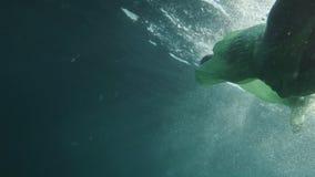 Het jonge meisjesmodel onderwater op blauwe achtergrond stelt in overzees stock footage