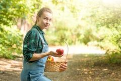 Het jonge mooie landbouwbedrijfmeisje oogst appelen Het concept de zomer of de herfstoogst met lege ruimte voor het schrijven stock foto