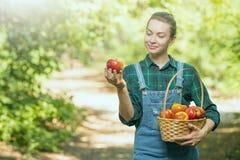 Het jonge mooie landbouwbedrijfmeisje oogst appelen Het concept de zomer of de herfstoogst met lege ruimte voor het schrijven royalty-vrije stock foto's