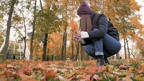 Het jonge mooie meisje verzamelt een boeket van gevallen bladeren in de herfstpark stock footage