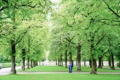 Het jonge paar bekijkt kaart tussen gebladerte van de kalk het groene boom in Hofg Royalty-vrije Stock Foto