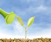 Het jonge plant nieuwe leven Stock Afbeeldingen