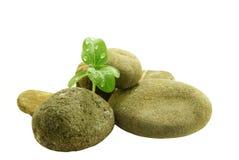 Het jonge spruit groeien door de stenen stock afbeelding