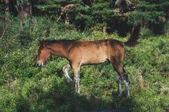 het jonge veulen weiden in het bos royalty-vrije stock afbeelding