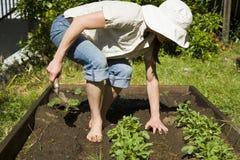 Het jonge vrouw tuinieren. royalty-vrije stock foto