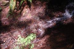 Het kabbelen van beek bij Snoqualmie-Dalingen Royalty-vrije Stock Afbeeldingen