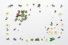 Het kader met gebied bloeit klavers en kamille Royalty-vrije Stock Fotografie
