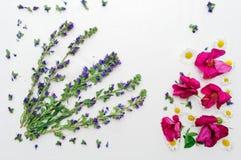 Het kader met gebied bloeit roze thee toenam en kamille Royalty-vrije Stock Afbeeldingen