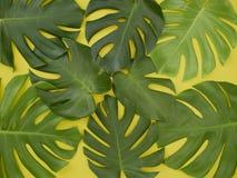Het kader Monstera verlaat Gele achtergrond stock afbeelding