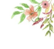 Het Kader Poppy Flower Floral Hand Painted van de waterverfhoek Stock Foto's