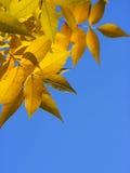 Het kader van bladeren Royalty-vrije Stock Afbeeldingen
