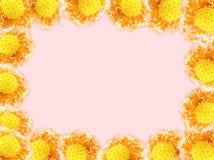 Het kader van de bloemfoto Stock Foto's