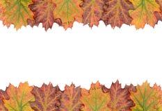 Het kader van de de herfstdecoratie dat van bladeren wordt gemaakt Stock Fotografie
