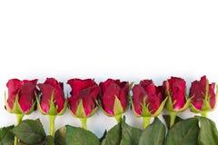Het kader van de groetkaart van rode rozen op een witte achtergrond met Exemplaarruimte en het gebruiken als Valentine-dagconcept Royalty-vrije Stock Afbeeldingen