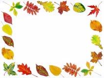 Het kader van de herfst royalty-vrije stock afbeeldingen