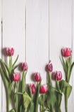 Het kader van de knoppen van tulpen Royalty-vrije Stock Afbeelding