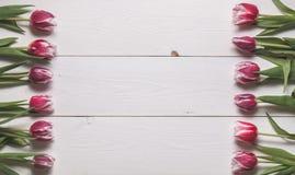 Het kader van de knoppen van tulpen Royalty-vrije Stock Fotografie