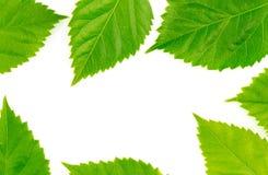 Het kader van het aardvoedsel met verse groene bladeren Stock Foto
