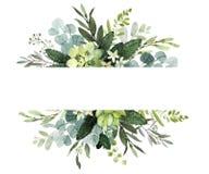 Het kader van het huwelijksgroen Waterverfillustratie met eucalyptus takjes vector illustratie