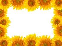 Het kader van zonnebloemen Stock Foto's