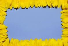 Het kader van het zonnebloemenbloemblaadje royalty-vrije stock afbeeldingen