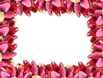 Het kaderachtergrond van de tulpenbloem Stock Afbeeldingen