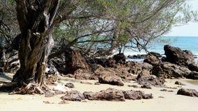 Het kalme tropische strand stock foto's