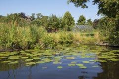 Het kalmeren van rivier in Giethoorn Stock Afbeeldingen