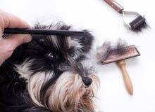 Het kammen van leuke hond royalty-vrije stock fotografie