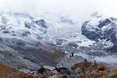 Het Kamp van de Annapurnabasis, de bergen van Himalayagebergte, Nepal Royalty-vrije Stock Fotografie