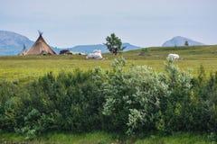 Het kamp van rendierherders in het Polaire Natuurreservaat van Oeralgebergte royalty-vrije stock foto's