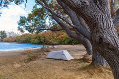 Het kampeerterrein bij Meer Pearson/Moana Rua Wildlife Refuge bepaalde van in Craigieburn Forest Park in Canterbury, Nieuw Zeelan royalty-vrije stock foto