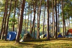 Het kamperen achtergronden Stock Foto