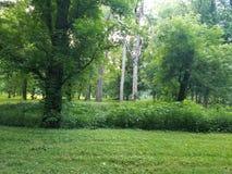 Het kamperen bij Hocking-Heuvels in Ohio royalty-vrije stock foto's