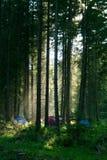 Het kamperen in bos Royalty-vrije Stock Afbeelding