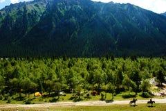 Het kamperen in de vallei Stock Fotografie