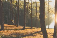Het kamperen in Pang Tong Under Royal Forest Park royalty-vrije stock foto
