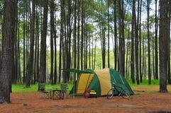 Het kamperen in pijnboombos Stock Foto