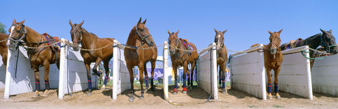 Het Kampioenschap van het Polo van de wereld Royalty-vrije Stock Fotografie