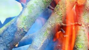 Het kampvuur, takken brandt stock videobeelden