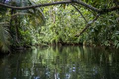 Het Kanaal en de Wildernis van Puntauva in Costa Rica Royalty-vrije Stock Foto