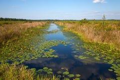 Het kanaal van de drainage met waterlelies, Noord-Carolina stock foto