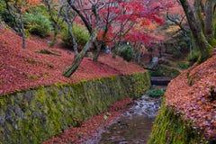 Het kanaal van de herfstbladeren in Tofukuji-tempel Stock Fotografie